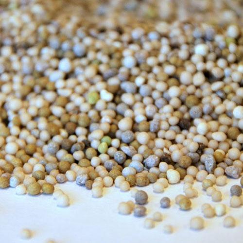 Sedum onderhoud conditioner korrels bemesting groendak