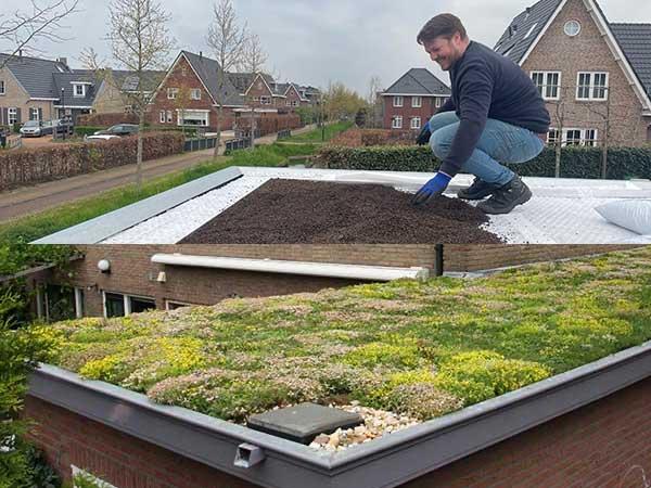 Offerteaanvraag sedum groen dak