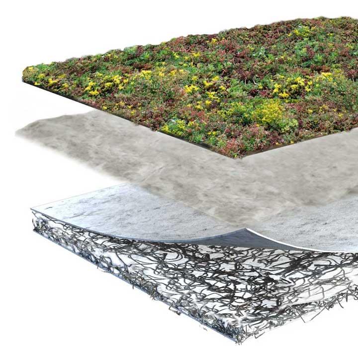 Product lagen sedum pakket lichtgewicht voor groene daken