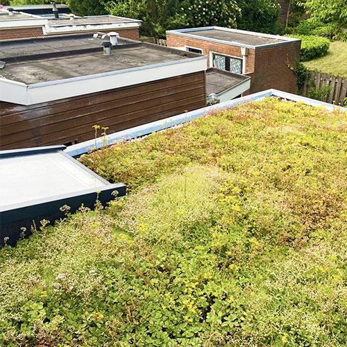 Extensief groen dak voorbeeld