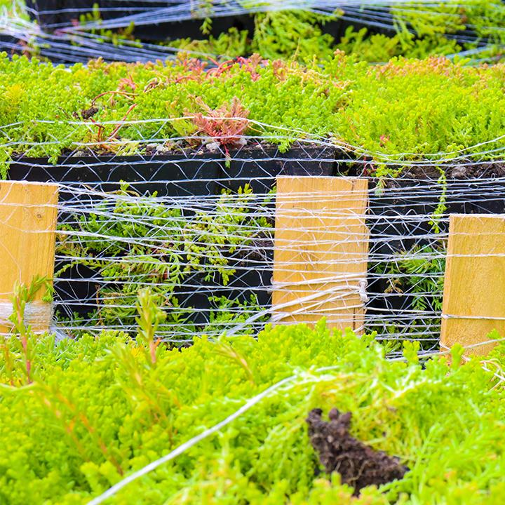 Groendak Cassettes als groene tegels voor jouw dak